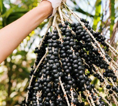 fresh_acai-berries